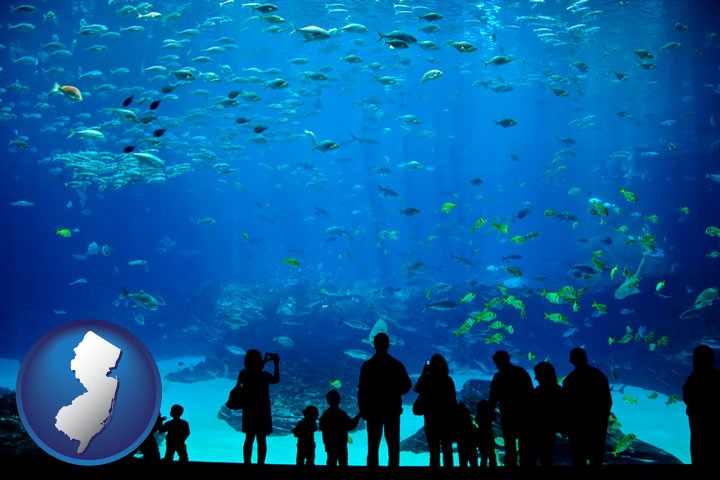 Aquariums Supplies Retailers In New Jersey