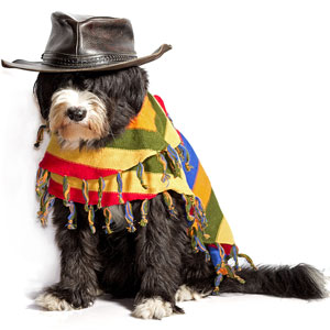 a dog wearing a Mexican sombrero and poncho