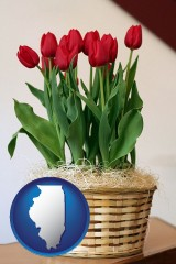 illinois a gift basket with red tulips