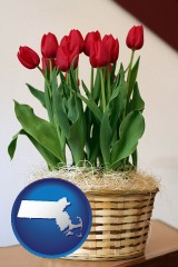 massachusetts map icon and a gift basket with red tulips
