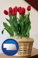 nebraska a gift basket with red tulips
