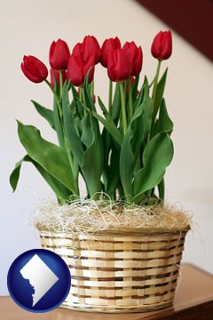 a gift basket with red tulips - with Washington, DC icon
