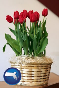 a gift basket with red tulips - with Massachusetts icon