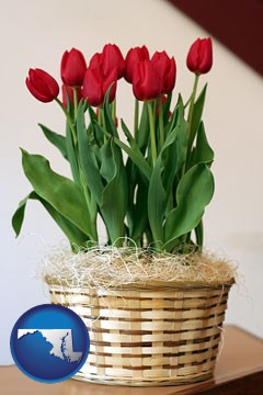 a gift basket with red tulips - with Maryland icon