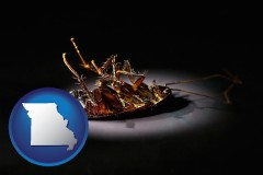 missouri map icon and a dead cockroach