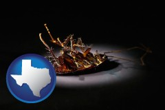 texas map icon and a dead cockroach