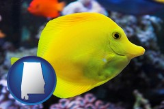 alabama yello tang saltwater aquarium fish