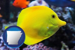 arkansas yello tang saltwater aquarium fish