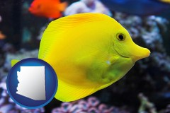 arizona yello tang saltwater aquarium fish