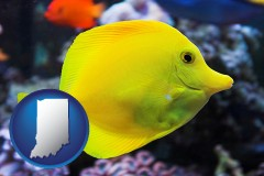 indiana yello tang saltwater aquarium fish