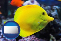 kansas yello tang saltwater aquarium fish