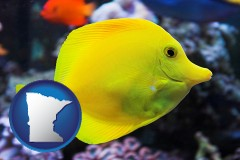 minnesota yello tang saltwater aquarium fish