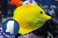 mississippi yello tang saltwater aquarium fish