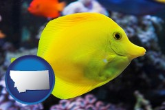 montana yello tang saltwater aquarium fish