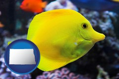 north-dakota yello tang saltwater aquarium fish