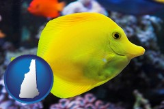 new-hampshire yello tang saltwater aquarium fish