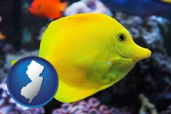 new-jersey yello tang saltwater aquarium fish