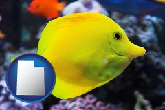 utah yello tang saltwater aquarium fish