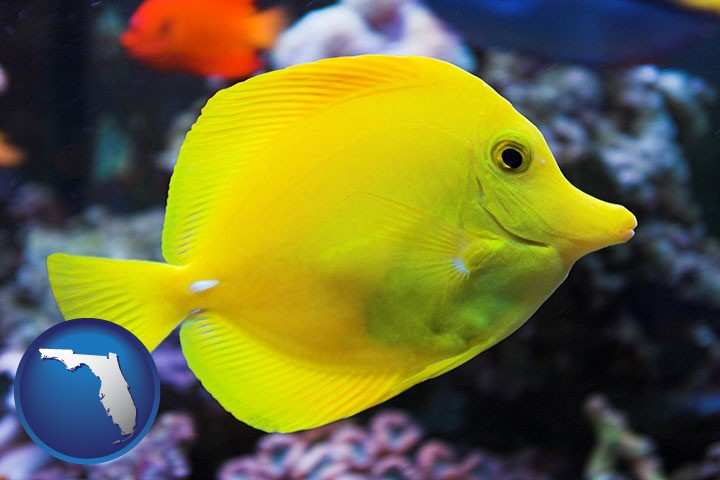 Tropical saltwater fish retailers in florida for Exotic saltwater fish