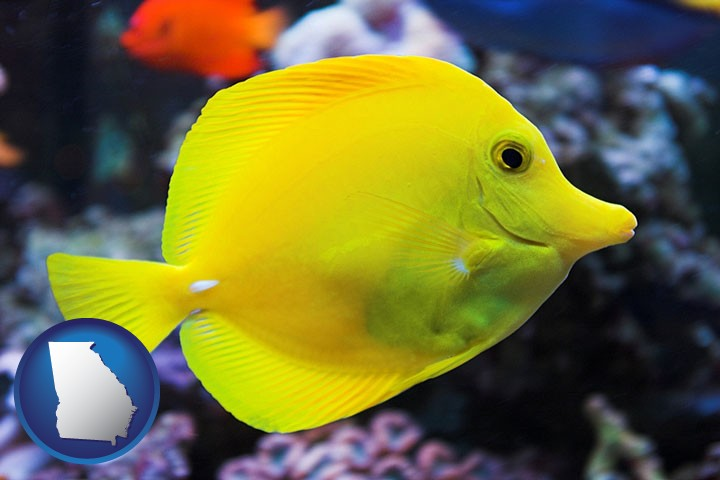 tropical saltwater fish retailers in georgia