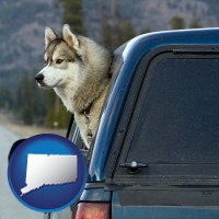 connecticut map icon and a truck cap and a Siberian husky