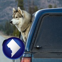 washington-dc a truck cap and a Siberian husky