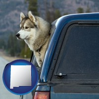 new-mexico a truck cap and a Siberian husky