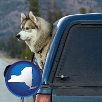 new-york map icon and a truck cap and a Siberian husky