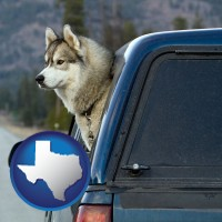 texas a truck cap and a Siberian husky