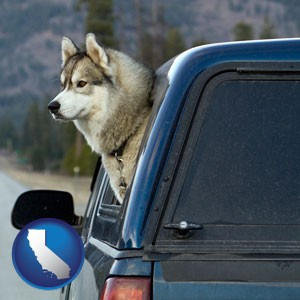 a truck cap and a Siberian husky - with California icon