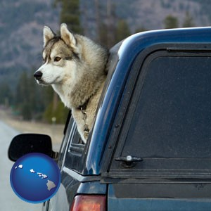 a truck cap and a Siberian husky - with Hawaii icon