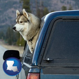a truck cap and a Siberian husky - with Louisiana icon