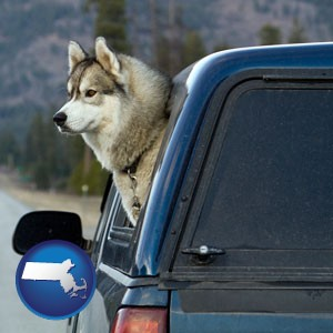 a truck cap and a Siberian husky - with Massachusetts icon