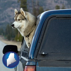 a truck cap and a Siberian husky - with Maine icon