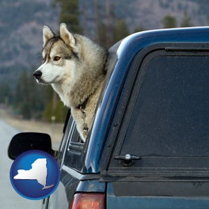a truck cap and a Siberian husky - with New York icon