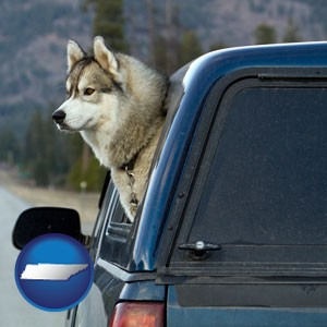 a truck cap and a Siberian husky - with Tennessee icon