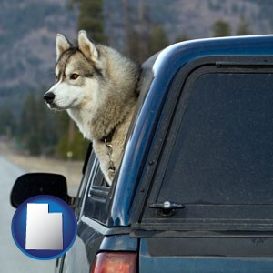 a truck cap and a Siberian husky - with Utah icon