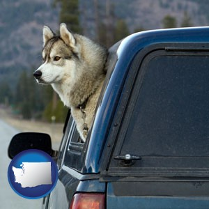 a truck cap and a Siberian husky - with Washington icon