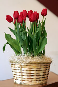 a gift basket with red tulips